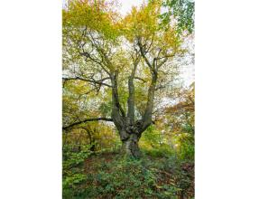 Buckinghamshire Council protects historic Burnham Beeches woodland