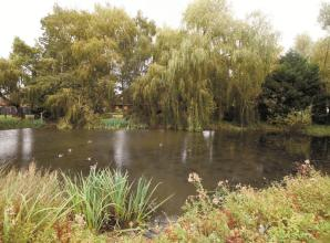 Bray community news (September 12): Holyport pond and its inhabitants revived