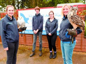 Falconry centre calls for public's help finding new home