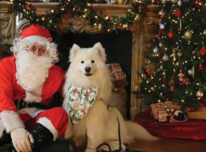 Father Christmas will greet dogs at Battersea's annual Santa Paws event