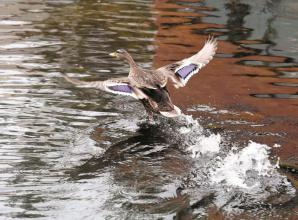 Maidenhead Waterways launches photography competition