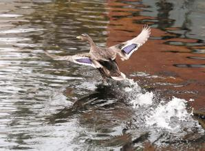 Maidenhead Waterways photography competition still open to enter