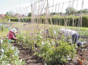 Cookham Community Allotment gets grant for new benches