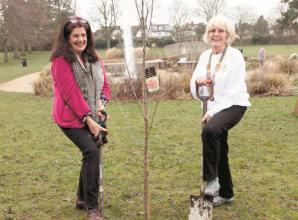 Maidenhead tree planting marks momentous occasion