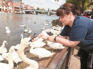Swan rescue charity to move to Bray Lake after 'dream' plans are approved
