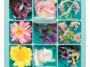 How to show off your home-grown flowers in ice cubes for summer parties