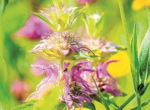 How to plant your own little prairie